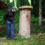 Hier Hausen die Bienen in einem Baumstamm