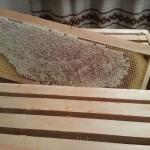 Reifer Honig in den Waben