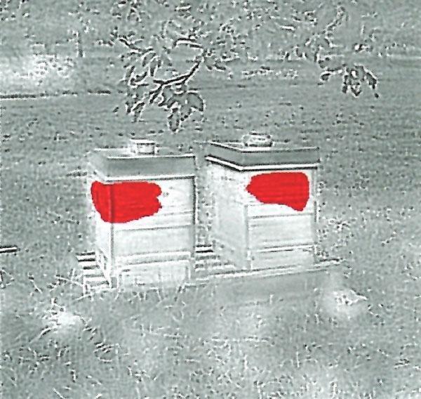 BeeBeeWatch Thermo Schwarz/Weiss Beute
