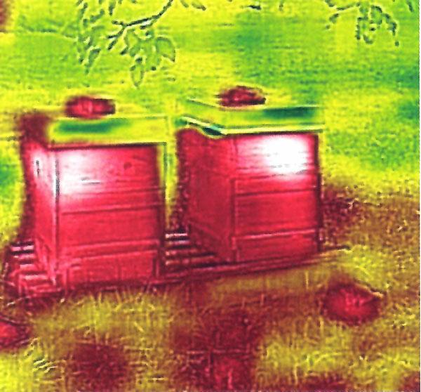 BeeBeeWatch Thermo Wärmebild