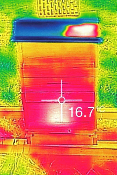 BeeBeeWatch Thermo mit Temperaturanzeige